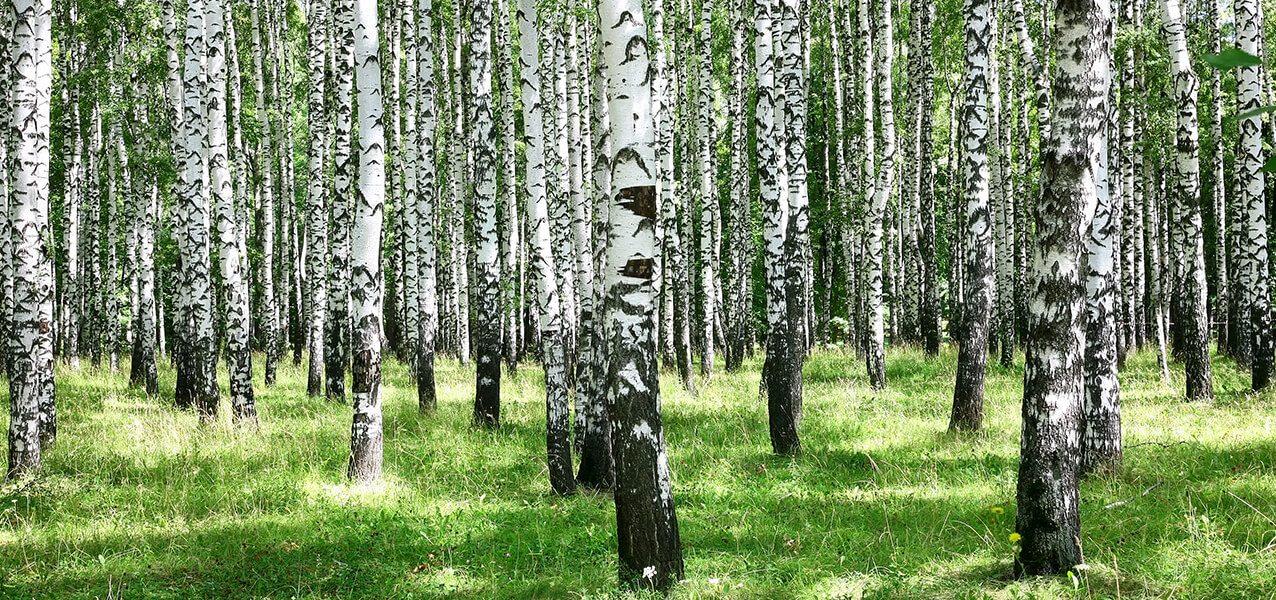 Bildergallerie Wir unterstützen nachhaltige Forstwirtschaft
